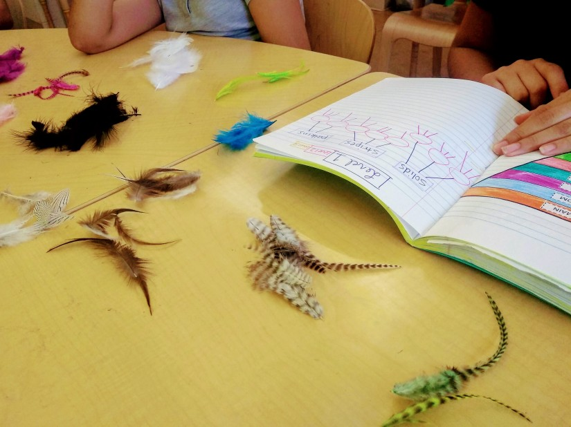 taxonomy of feathers classifying life science organisms dichotomous key
