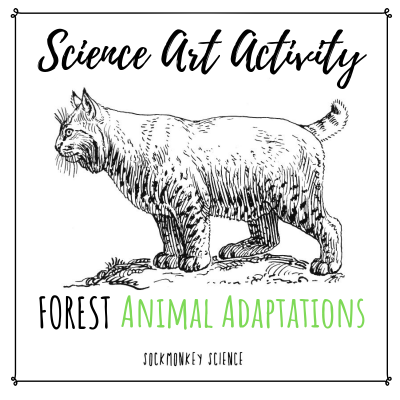 teaching science with art animal adaptations for kids